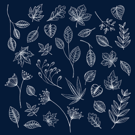 umbel: Chalk sketches of tree branch, leaf, seed and inflorescence of wild herbs. Floral decoration and botanical theme design