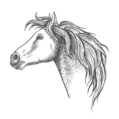 filly: Racehorse head sketch icon with mare horse. Equestrian eventing symbol or horse racing design Illustration