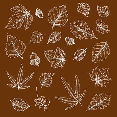 oak trees: Autumnal fallen leaves and acorns chalk sketches with foliage and fruits of oak, maple, birch and cherry, palm, elm and poplar trees. Use as nature, ecology and season theme design