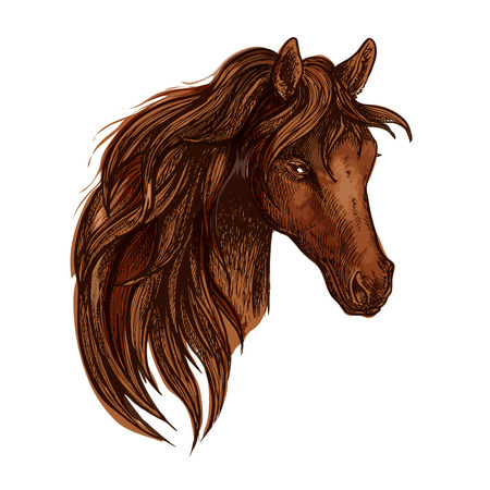 gaze: Horse with long wavy mane. Artistic portrait of beautiful brown stallion with shiny eyes and proud look