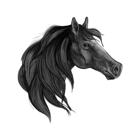 mare: Black horse sketch of purebred arabian mare with silky mane. Equestrian sport, horse racing or t-shirt print design