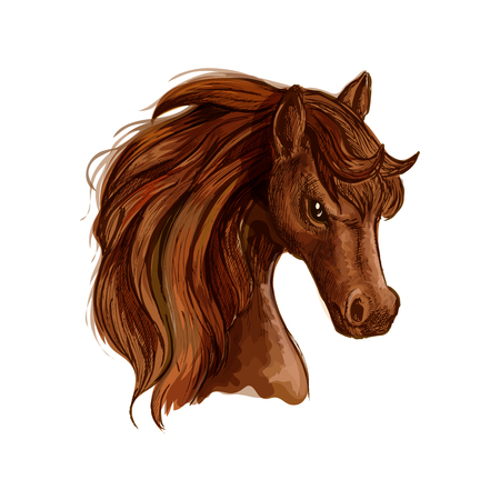 Brown arabian mare horse sketch with chestnut mane and curly forelock. Equestrian sport, horse racing themes or t-shirt print design