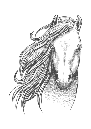 Beautiful wild horse sketch icon. Head and shoulders portrait of mustang mare for equestrian sport theme or t-shirt print design