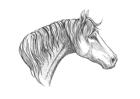 racehorse: Racehorse head sketch icon for horse racing or another equestrian sporting activities symbol design with strong and speedy purebred american quarter stallion