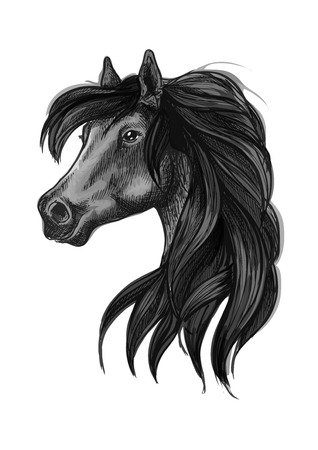 filly: Horse head icon of black arabian stallion. Equestrian sporting competition mascot or t-shirt print design