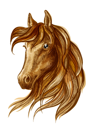 racehorse: Brown stallion horse head sketch with purebred arabian racehorse. Equestrian sporting theme, horse racing badge and t-shirt print design Illustration