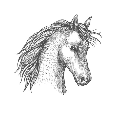 horses in the wild: Sketched head of arabian horse symbol with long wavy mane. Equestrian sport or horse breeding themes design
