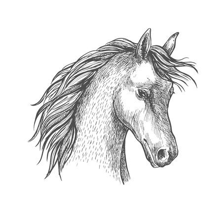 mane: Sketched head of arabian horse symbol with long wavy mane. Equestrian sport or horse breeding themes design