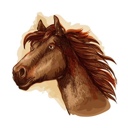 racehorse: Brown mare horse head icon with bay racehorse. Equestrian sporting symbol, horse racing and t-shirt print design