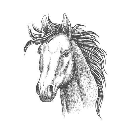 mare: Mare horse sketch symbol. Equestrian sport, riding club, horse racing theme design Illustration