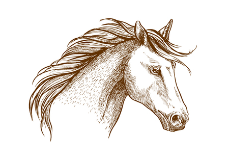 colt: Sketched stallion horse icon with a head of arabian colt. Equestrian sport theme, horse racing or riding club symbol design