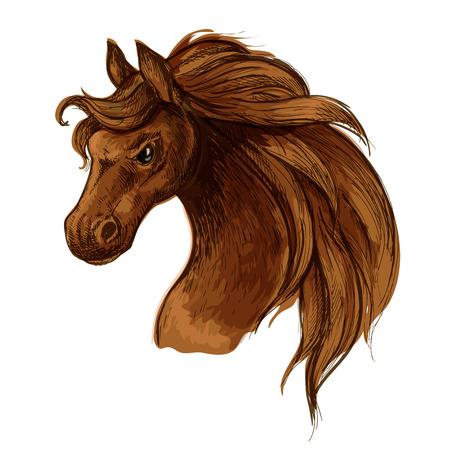 mane: Horse head sketch portrait. Mustang stallion with brown waving mane