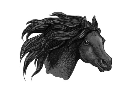 raging: Black horse sketch portrait. Isolated head of running mustang head on white background