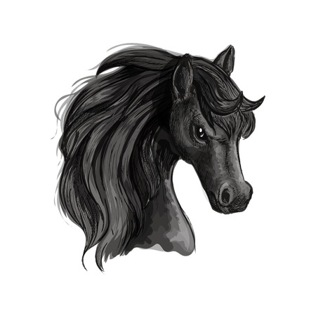 mane: Horse head pencil sketch portrait. Vector isolated black stallion with mane on white background