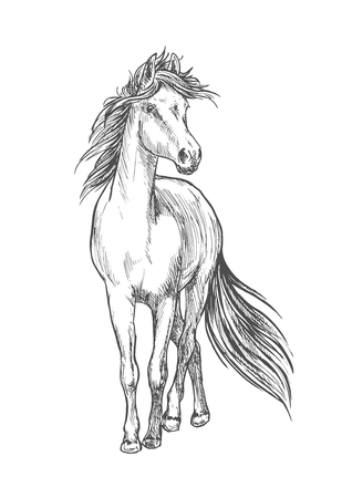 equine: Standing horse pencil sketch. Walking full length mustang stallion vector etching Illustration