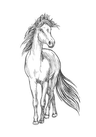 Standing horse pencil sketch. Walking full length mustang stallion vector etching Illustration