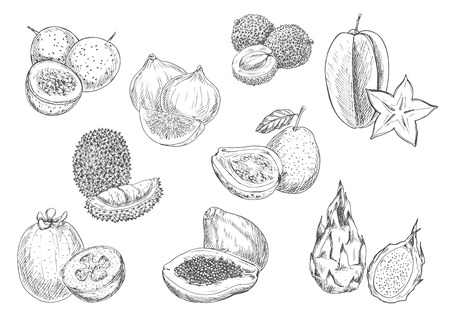 guava fruit: Exotic and tropical fruits. Vector pencil sketch isolated icons of papaya, durian, carambola, lychee, mangosteen, guava, fig, dragon fruit