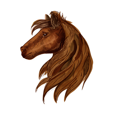 foal: Horse head portrait. Brown stallion foal with mane and staring eyes