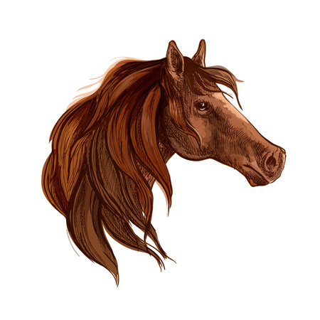 glance: Bay horse with long mane vector portrait. Brown stallion mustang head wth gazing glance