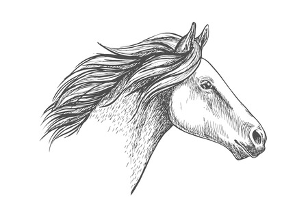 White horse pencil sketch portrait. Running horse with waving mane on white background