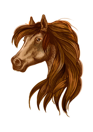 gazing: Brown horse head with long wavy mane. Gazing bay stallion. Beautiful pony portrait