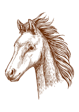 Horse pencil sketch portrait. Brown horse with waving mane. Proud stallion with bold glance Illustration