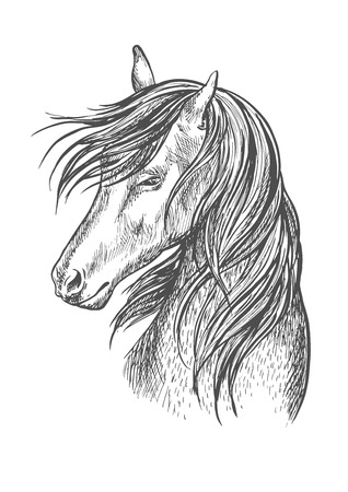 modest: Horse pencil sketch portrait. Beautiful stallion or mare with shy look expression and waving mane. Vector line silhouette