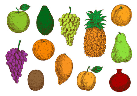 red grape: Fresh tropical and exotic fruits. Vector sketch isolated icons of apple, mango, grape, orange, avocado, apricot, pineapple, peach, pear kiwi and pomegranate