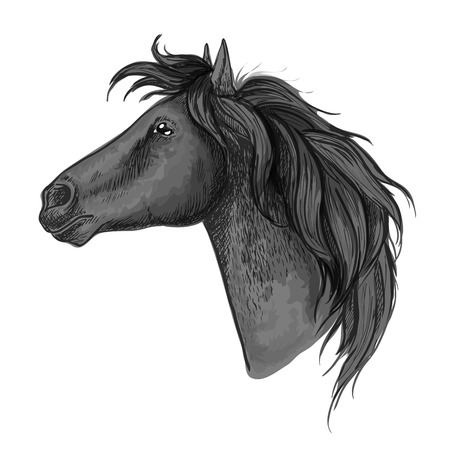 looking straight: Black proud horse stallion profile portrait. Mustang head and neck with wavy mane and straight look