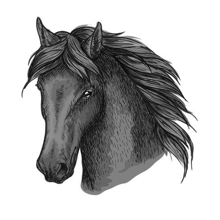 Black horse portrait. Mustang stallion with calm look, wavy mane and kind eyes. For equesrian sport usage