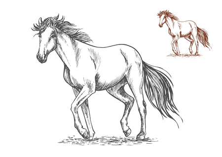 Running white horse pencil sketch portrait. Mustang with stamping hoofs gait and wavy tail on lawn Illustration