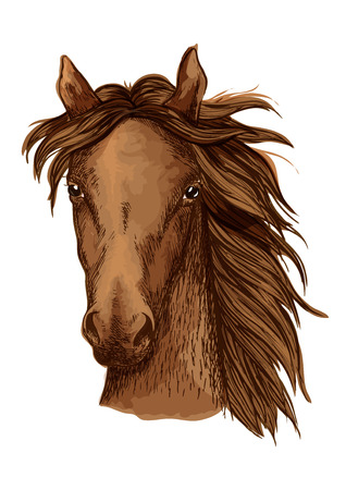 Beautiful brown horse artistic portrait. Bay mustang stallion with long wavy mane looking straight forward. Equestrian sport Illustration