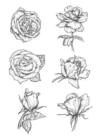 etched: Roses buds icons. Vector pencil sketch flowers with leaves on stem. Graphic emblems for tattoo, decoration Illustration