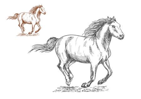 実行中の馬の鉛筆スケッチ肖像画。自由と茶色と白のムスタング種牡馬ギャロップ歩行