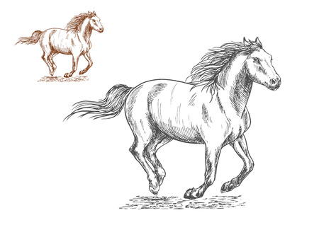 Running horses pencil sketch portrait. Brown and white mustang stallions with freedom gallop gait Illustration