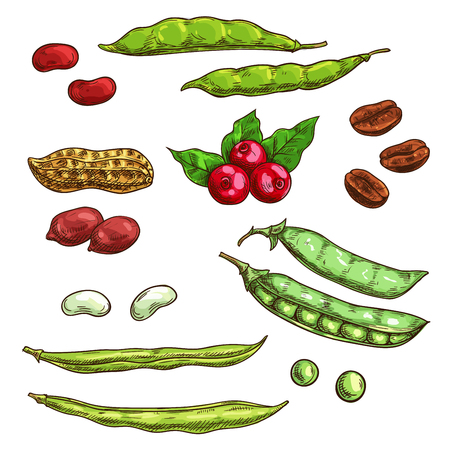 in peas: Nuts, kernels and berries isolated icons. Vector sketch elements of plants seeds, coffee beans, pea pod, bean, berries, cranberry