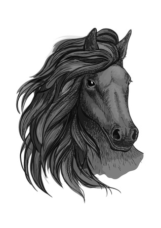 glance: Black horse with passionate glance portrait. Beautiful mustang with wavy mane and bent head