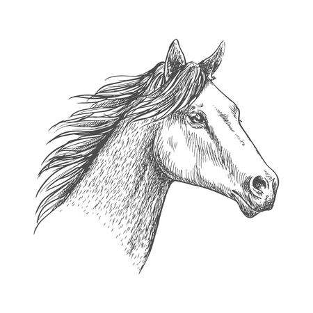 glance: Horse with mane waving in wind. Proud and free mustang stallion pencil sketch strokes portrait