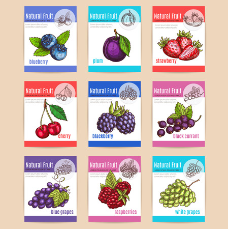 red grape: Natural fruits and berries with titles. Poster with vector sketch icons of blueberry, plum, strawberry, cherry, blackberry, blackcurrant, blue grapes, raspberries, white grapes