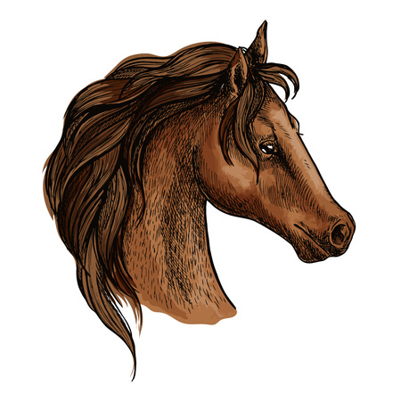 brown eyes: Horse head profile portrait. Proud brown mustang with long wavy mane and thoughtful pensive eyes Illustration
