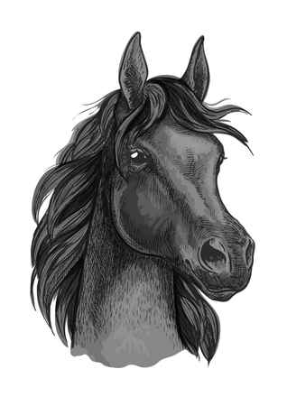Black horse portrait with shiny dark eyes. Beautiful mustang with thick mane waving in wind Illustration