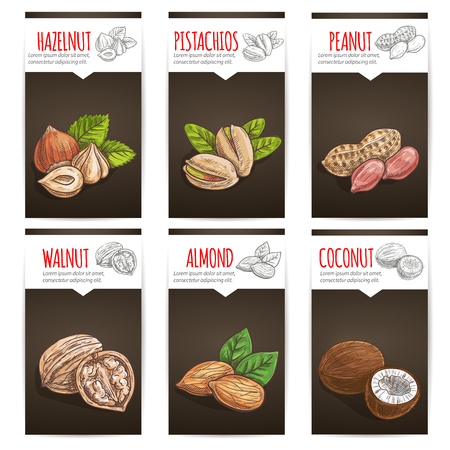 hazelnut: Nuts with titles poster background. Vector sketch icons of plants seeds, hazelnut, pistachios, peanut, walnut, almond, coconut for tag sticker, product label