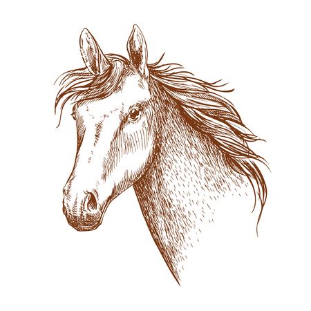 pace: Arabian stallion horse head sketch for equestrian sporting design. Horse racing symbol or riding club badge design