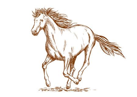 Brown croquis de cheval de course cheval jument arabian. le sport équestre, les courses de chevaux ou de t-shirt imprimé Banque d'images - 62638757