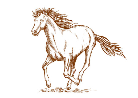 filly: Brown horse sketch of running arabian mare horse. Equestrian sport, horse racing or t-shirt print design