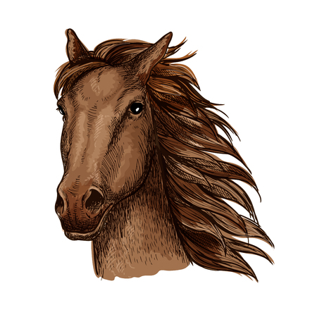 filly: Brown racehorse stallion sketch with head of purebred horse of arabian breed. Horse racing, riding club or equestrian sporting competition themes design Illustration