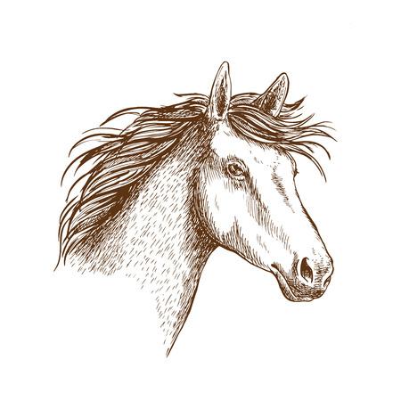 yegua: Bosquejado icono del caballo semental con la cabeza de montar a caballo árabe. tema deportivo ecuestre o una camiseta de diseño de impresión Vectores