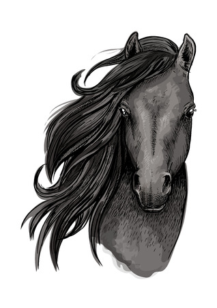 filly: Black mare horse symbol of sketched racehorse head with long mane swept to one side. Equestrian sporting club, horse racing or t-shirt print design