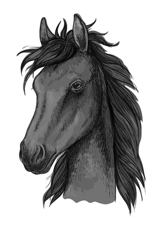 ranch background: Black arabian horse sketch of purebred stallion with fluffy forelock. Horse racing badge, equestrian sporting competition or t-shirt print design
