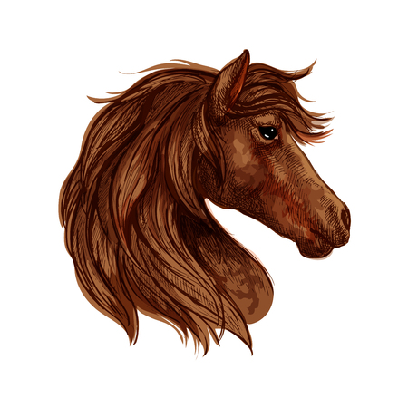 filly: Brown horse head sketch of arabian racehorse mare with curved neck. Horse racing or equestrian sporting themes design Illustration